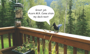 Home Repair-Deck Restoration-Deck Blue Jay by Acorn Maintenance Repair